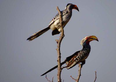jagdfarm-namibia-waterberg19