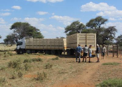 jagdfarm-namibia-waterberg23
