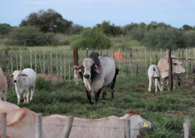 jagdfarm-namibia-waterberg3