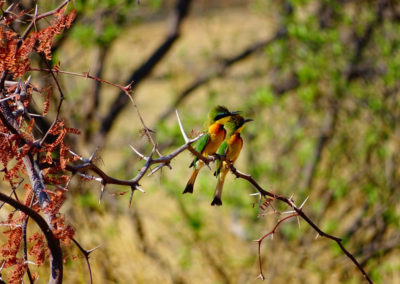 jagdfarm-namibia-waterberg5