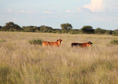 jagdfarm-namibia-waterberg7