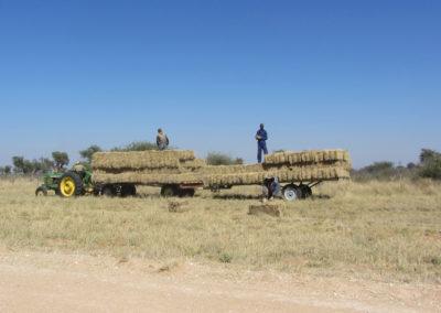 jagdfarm-namibia-waterberg8